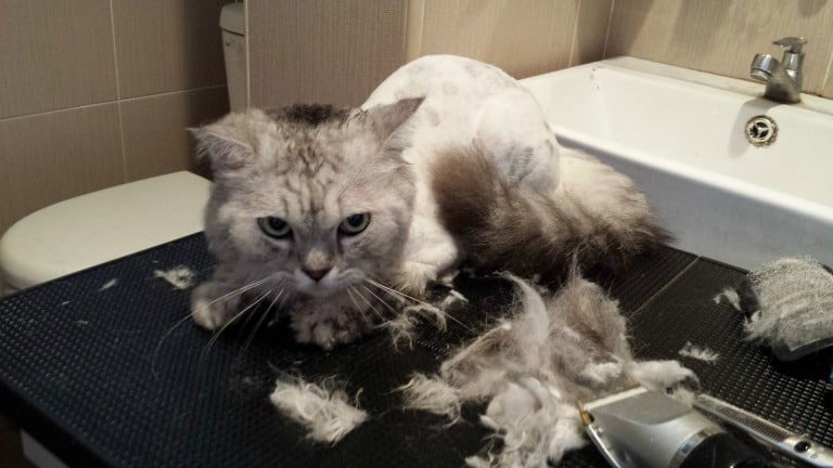 Cat Grooming Services Singapore