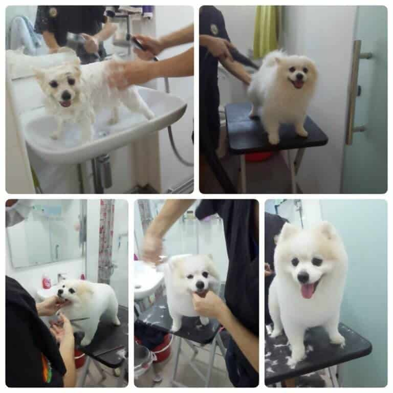 Dog Grooming Services Singapore