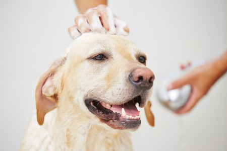 Benefits of Mobile Dog Grooming