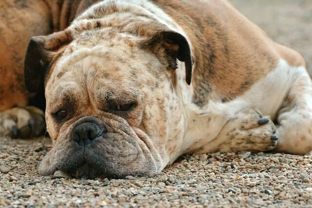 10 Toxic Fruits and Vegetables for Dogs