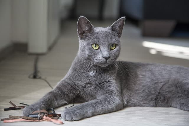 Pros And Cons Of Cats cats in heartland singapore: pros and cons