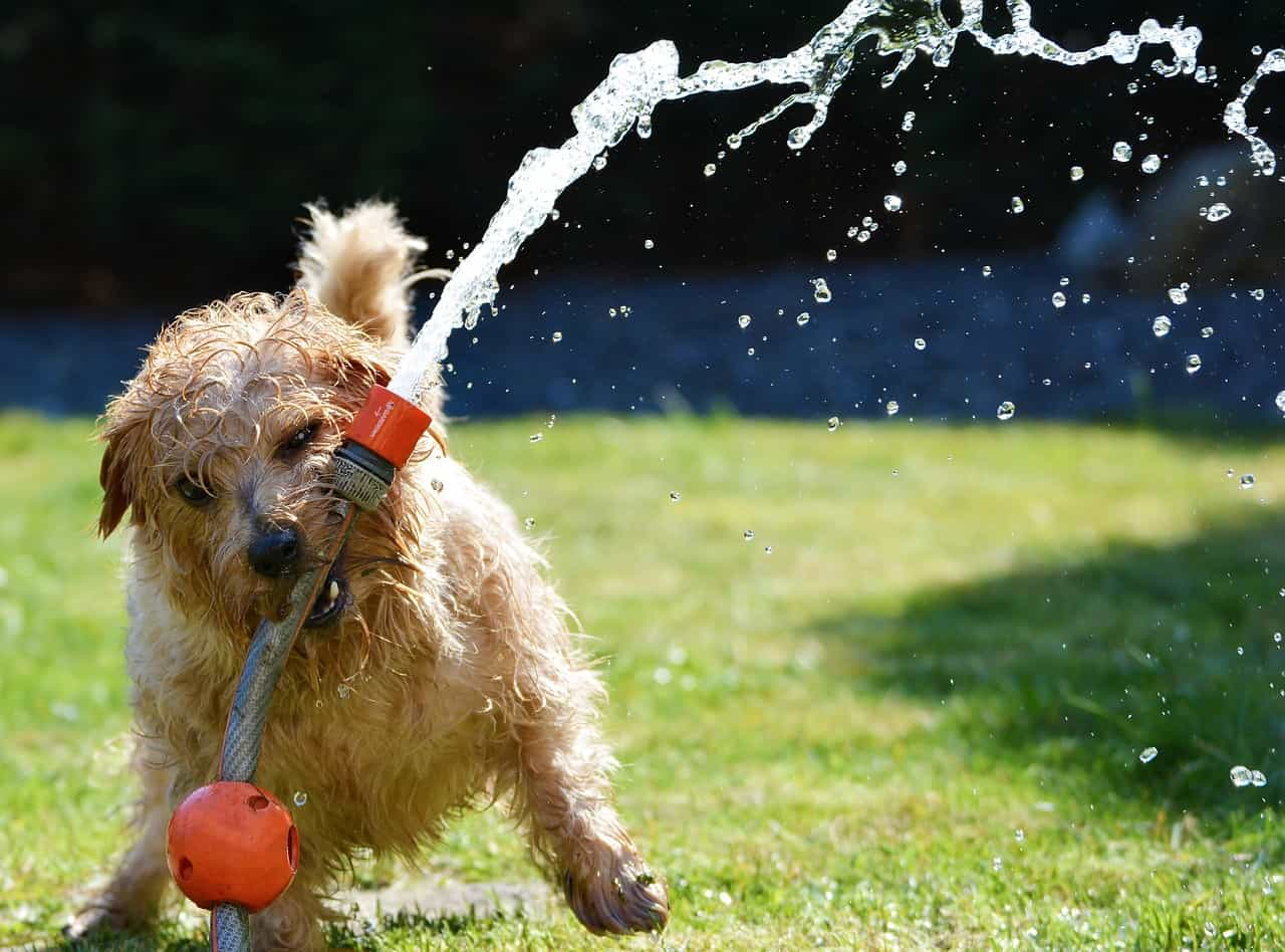 Why and When You Should Use Waterless Dog Shampoo?