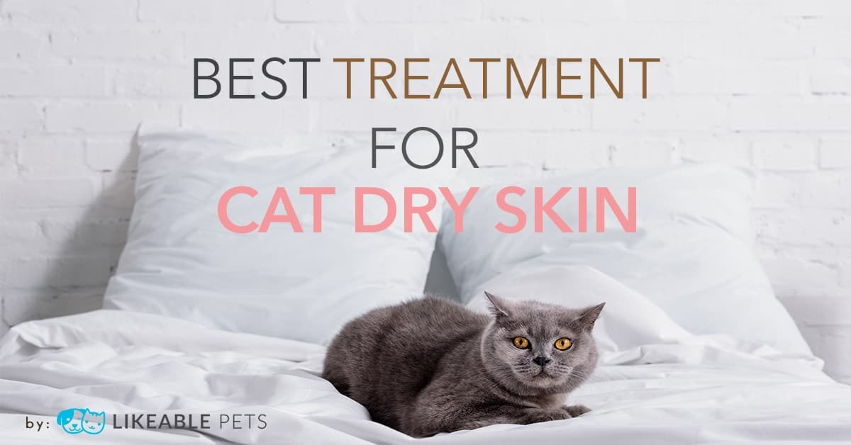 Cat Dry Skin Treatment: Product Reviews and Home Remedies