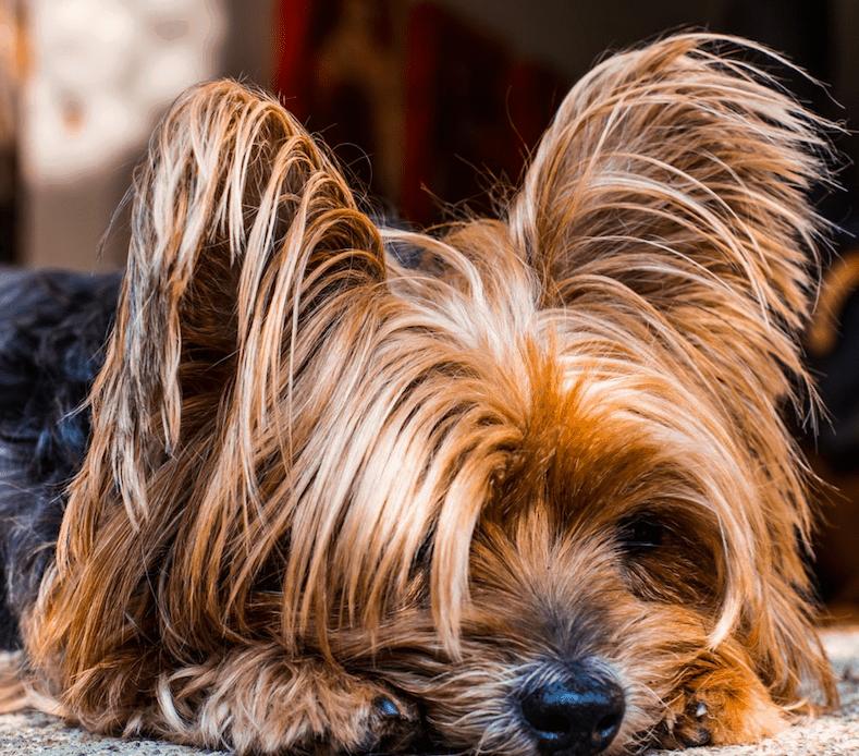 Long Haired Dog Vs Short