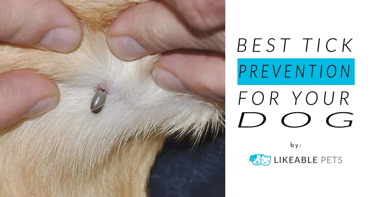 Best Tick Prevention for Dogs (Groomer's Pick 2018)