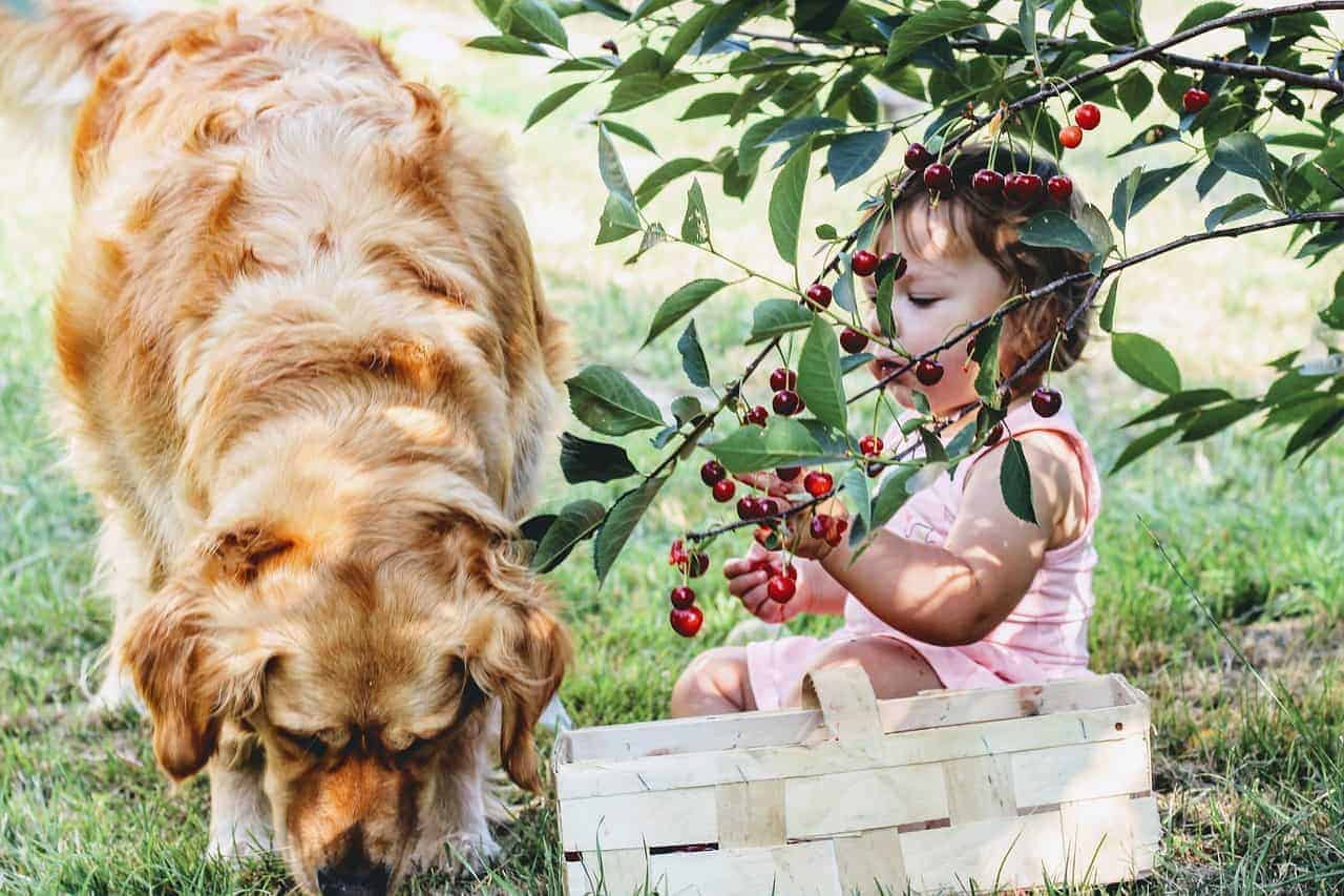 10 Best Fruits for Dogs to Eat