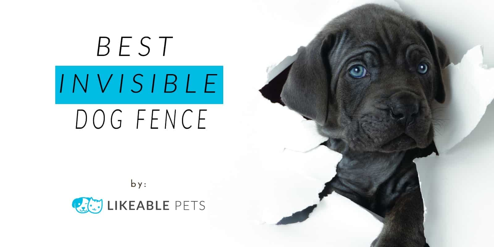 Best Invisible Dog Fence in 2018