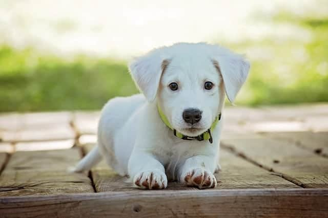 Useful Training Tips for Your Puppy