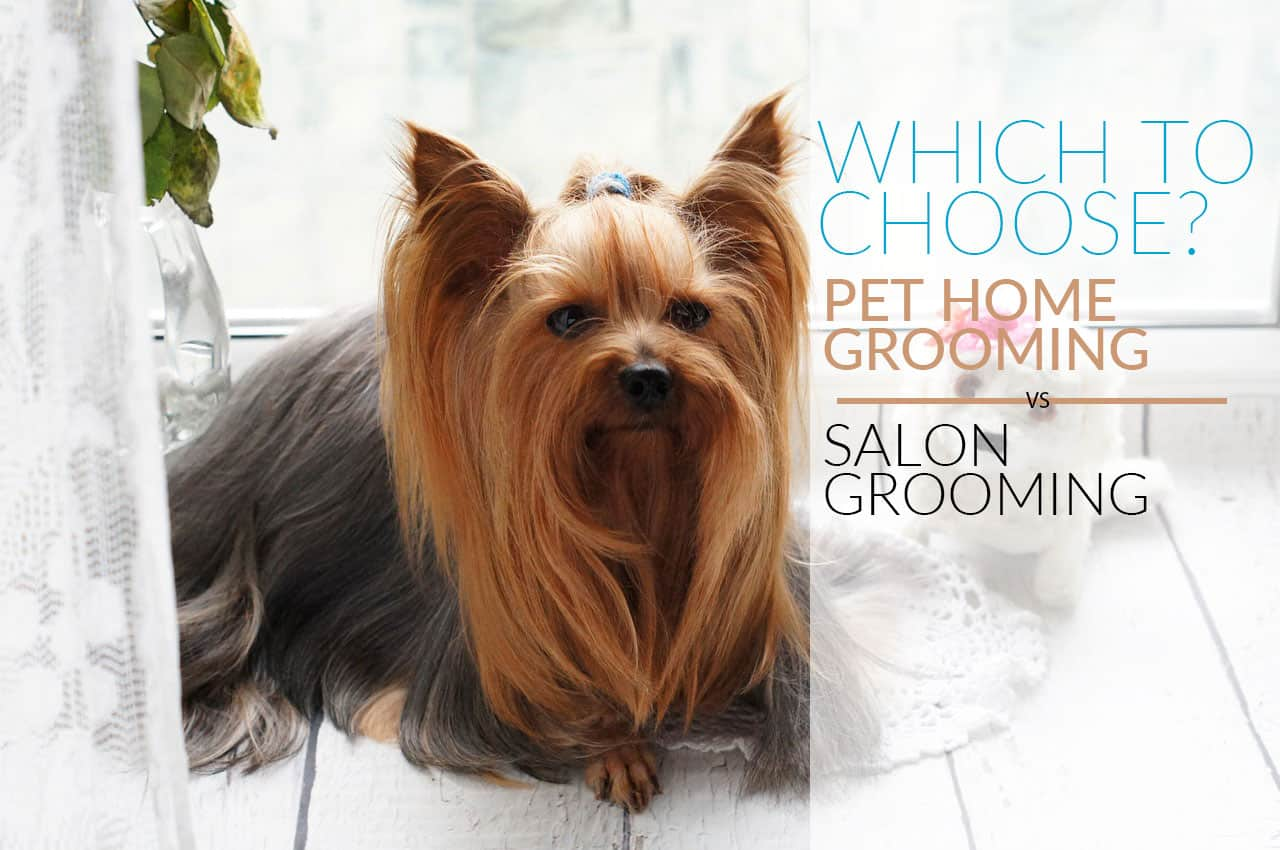 Pet Home Service vs Salon Grooming: Weighing their Pros and Cons